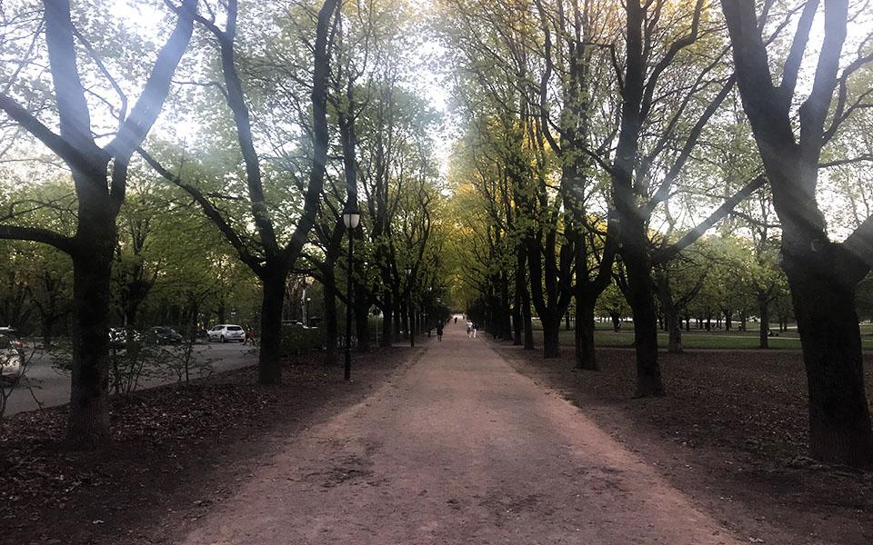 Frognerparken / Løping / Løpetrening